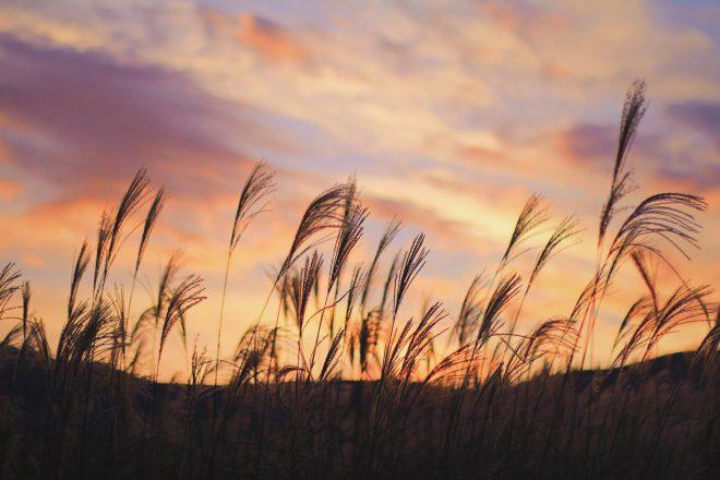 秋の夕焼けとススキ