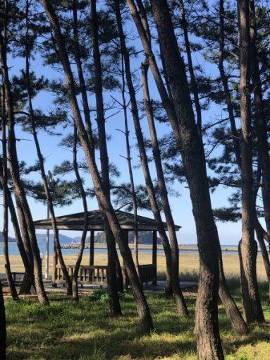 松林を背にした憩いの東屋(あずまや)「休憩所」