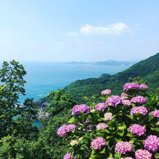 桃源郷のアジサイと太平洋