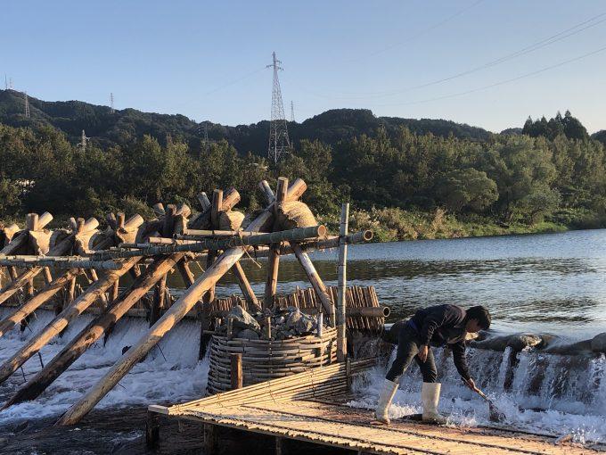 宮崎県延岡市大貫町 鮎やな タモ網で鮎を掬う光景